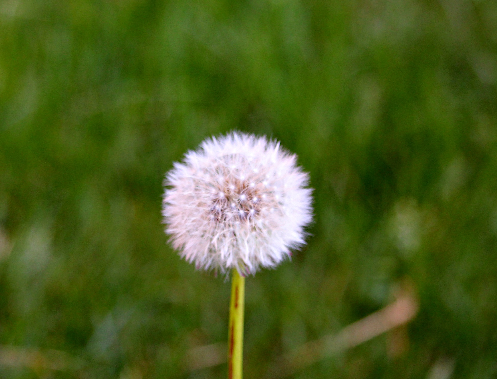 Dandelion-Merland-Park-Everything-Mom-and-Baby